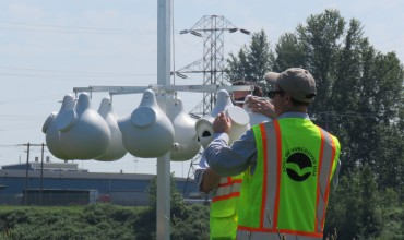 Purple martins get a new habitat at Port of Vancouver USA